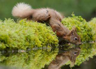 Animal, animal, rodent, Squirrel, the pond, the watering hole, moss