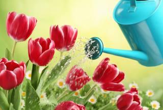 spring, flowers, tulips, lake, water, watering