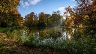the lake, trees, grass, autumn