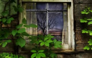 window, Old, the house, ivy, tree, art