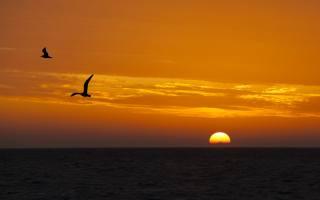 sunset, sea, the sky, seagulls