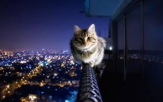 кіт, фото, вечір, місто