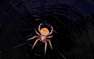 павук, павутина, ніч, макро
