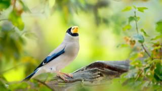 птахи світу, птиця, природа, корч, зелень