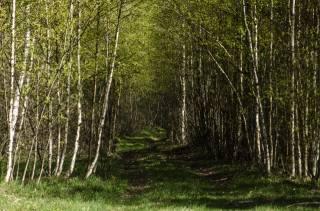 Aristovart, природа, пейзаж, природа, лес, дикий, tress, лес