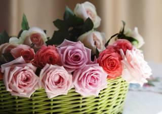 flowers, rose, basket