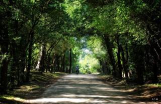 Uruguay, stromy, cesta, motocykl, muži