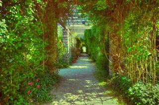 Park, Alley, greens, summer