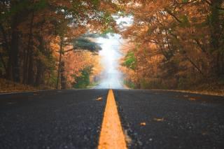 trees, leaves, autumn, fog
