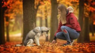 dog, trees, autumn, leaves, girl