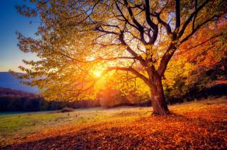 tree, branches, nature, autumn