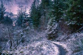 зима, сумерки, лес, деревья, тропинка, пейзаж