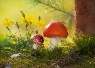 autumn, mushrooms, tree, moss, pine, cones, nature, toadstools, Vlad Vladilenoff, flowers