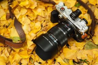 the camera, olympus, autumn, leaves