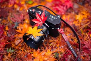 the camera, autumn