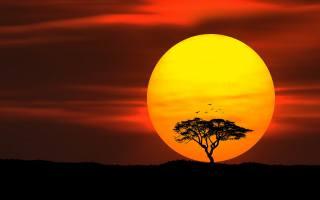 strom, slunce, západ slunce, horizont, minimalismus, umění, umění