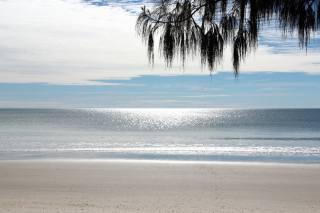 nebe, moře, pláž, větvička, příroda