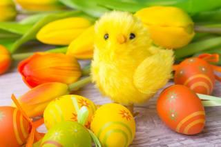 velikonoce, svátek, desky, VEJCE, dekor, květiny, tulipány, figurka, kuře, Velikonoce