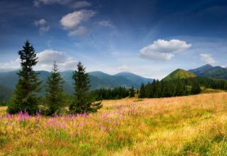 mountains, the slope, grass, tree, spruce, flowers, trees, the sky, nature