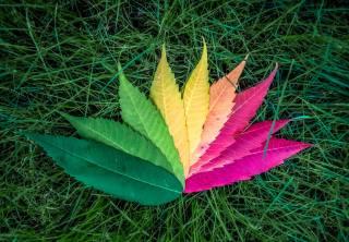 листья, осень