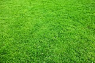 газон, трава, текстура