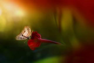 Eleonora Di Primo, makro, květina, motýl