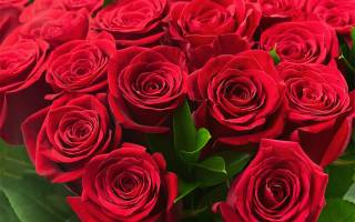 Krásné, barevné, růže, krásné, 8 března, růže, Světlé, červené, červená