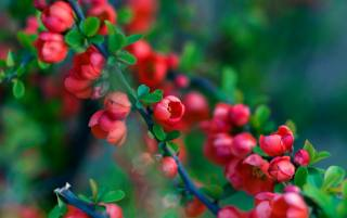 весна, цветение, цвітіння, дерево, ветка, гілка
