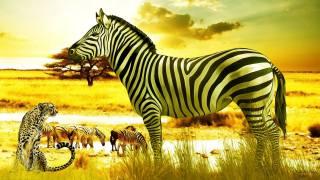 зебра, Гепард, саванна, Африка, 3d