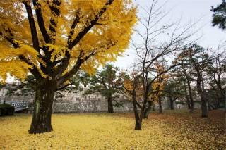 парк, листья, стена, осень