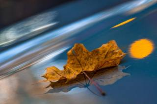 макро, відображення, осінь, лист, кленовий лист