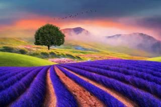 пейзаж, 3d, Рендеринг, туман, растительность, горы, птицы, поля, дерево