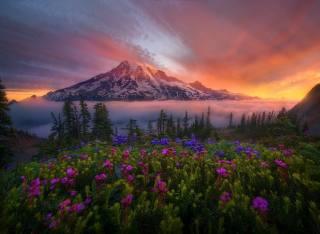 Marc Adamus, природа, краєвид, гора, хмари, туман, рослинність, квіти, дерева