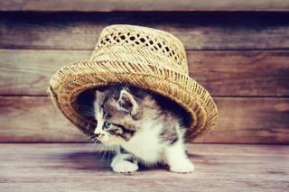 Тварина, кошеня, капелюх, дошки