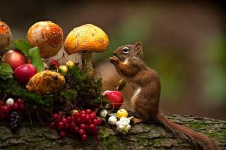 Andre Villeneuve, Тварина, Білка, колода, гриби, яблука, ягоди, мох