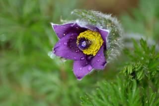 природа, весна, первоцвет
