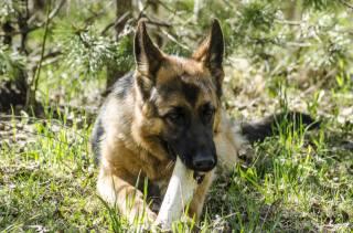 Aristovart, природа, природа, собака, тварина, собаки, тварини