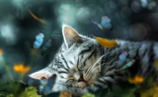 арт, колаж, Тварина, кошеня, сон, природа, метелики