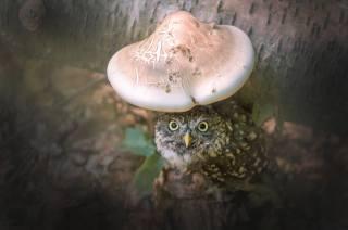 pták, Sova, strom, houba, listy, příroda