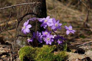 nature, spring, moss, tree, the barrel, flowers