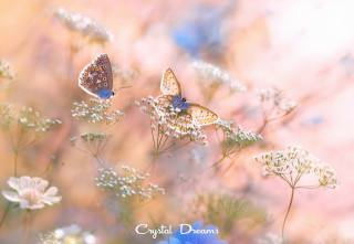 nature, summer, grass, butterfly, macro