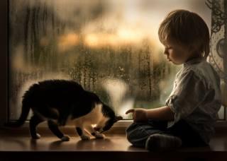 iwona podlasinska, child, baby, boy, window, drops, the rain, sill, Animal, kitten