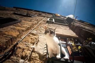 кот, окно, дом