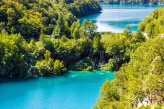 tropics, nature, Forest, the lake, water