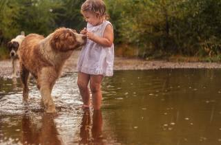 child, girl, baby, dress, nature, the rain, puddle, animals, dogs, fright