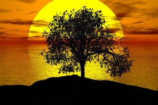 sunset, the sun, sea, tree, silhouette, Vector graphics