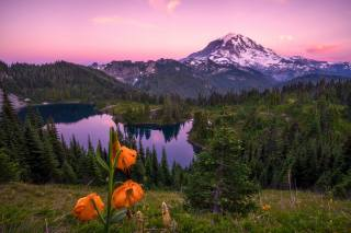 nature, mountains, the lake, Forest, trees, ate, flower, Lily, sunset