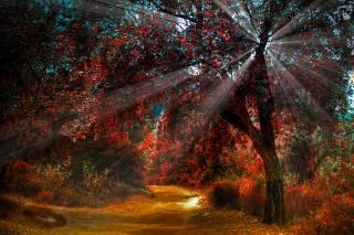 природа, осень, парк, лес, деревья, дорога, дорожка, лучи