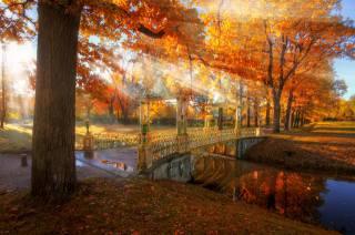осень, лучи, свет, деревья, природа, парк, канал, мостик, Ed Gordeev, Царское село, эдуард гордеев, Эд Гордеев, Гордеев Эдуард
