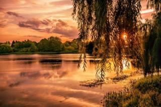 Gene Brumer, природа, пейзаж, озеро, деревья, ветки, закат, вечер